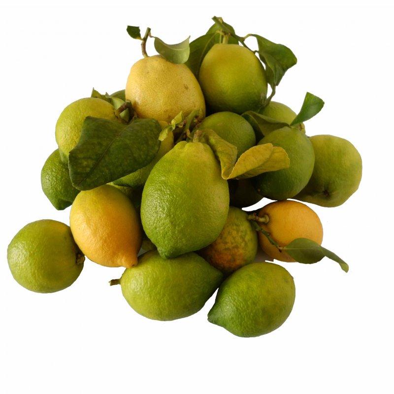 frutto fresco di limone