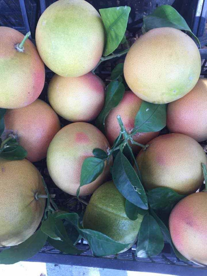 frutto fresco di pompelmo rosa