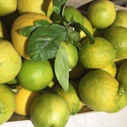 frutto fresco di bergamotto