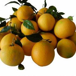 Frutto fresco di arancia novellina